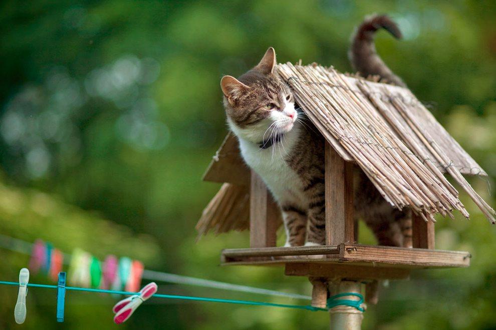 Кот в низкой кормушке