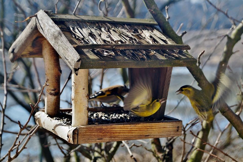 Самодельная кормушка для птиц