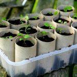 Втулки для рассады растений идея