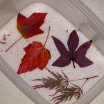 Различные листья