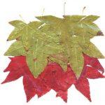 Как засушить листья?