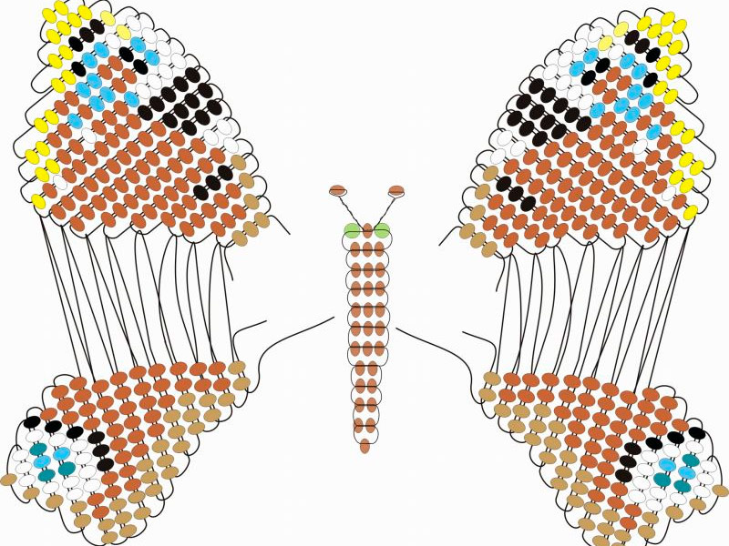 Бабочки схема