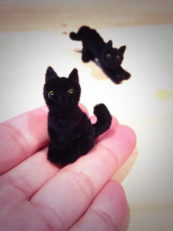 котик проволка