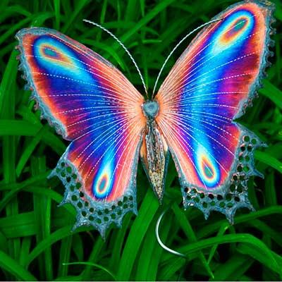 Стихи про бабочку