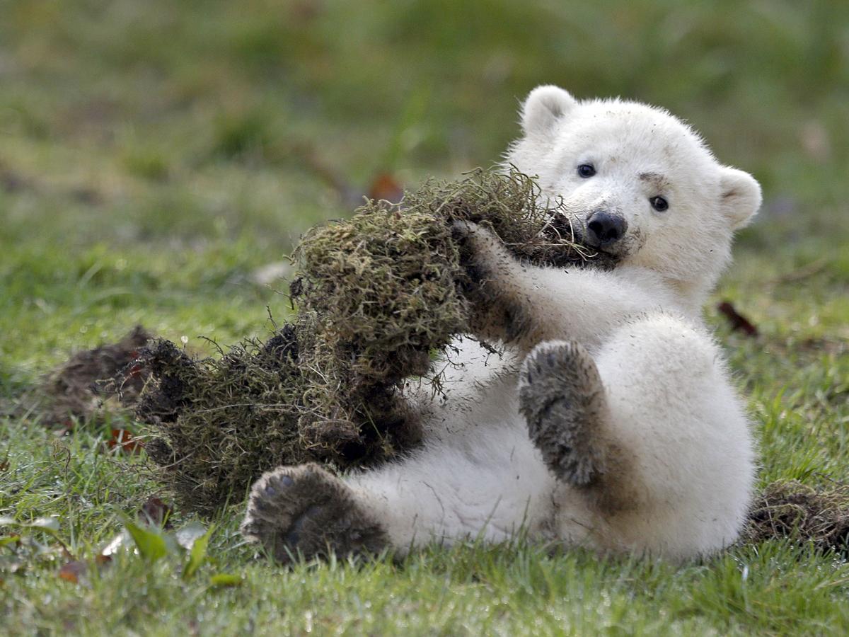 Стихи про медведей