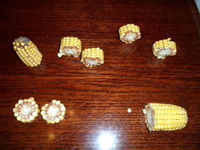 поделки из кукурузы сделать дома