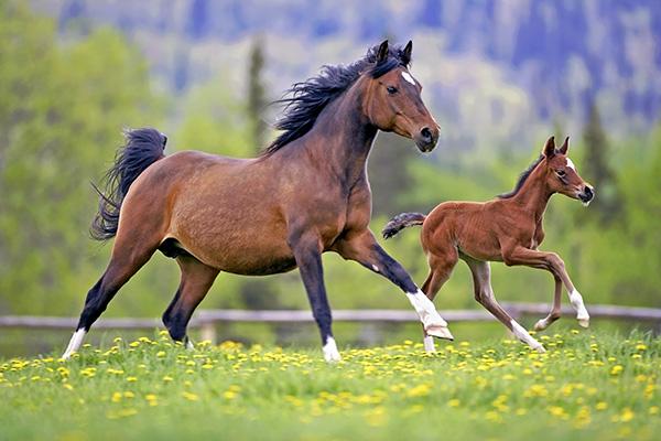 загадки про лошадей детские
