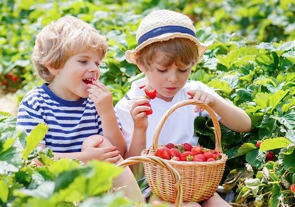 стихи про ягоды для детей