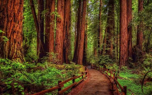 стихи про лес красивые