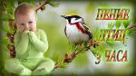 Звуки пения птиц