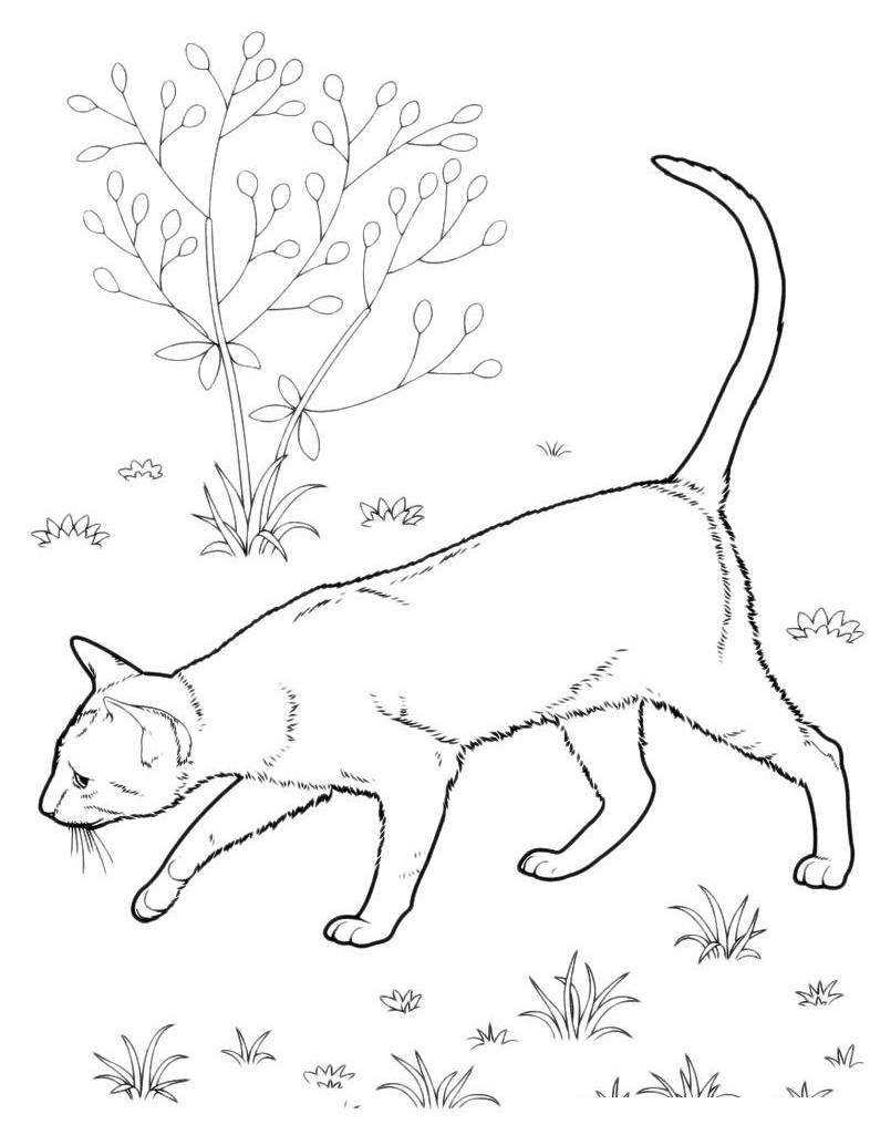 Раскраска Кот ищет след мышки распечатать или скачать ...