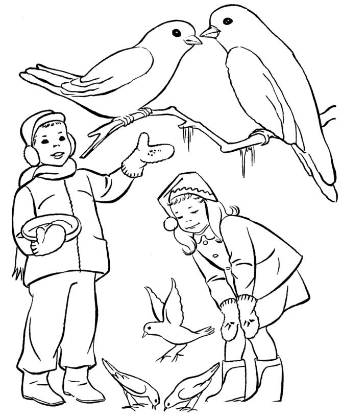 Раскраска Зимующие птицы распечатать или скачать бесплатно