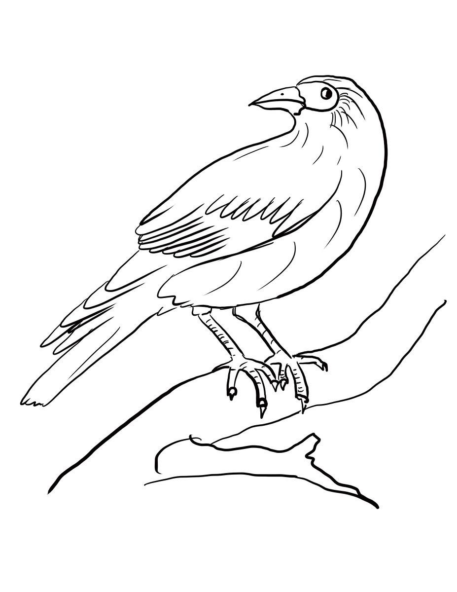 Раскраска Ворона на ветке дерева распечатать или скачать ...