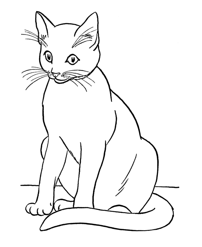 Раскраска Сиамский кот распечатать или скачать бесплатно