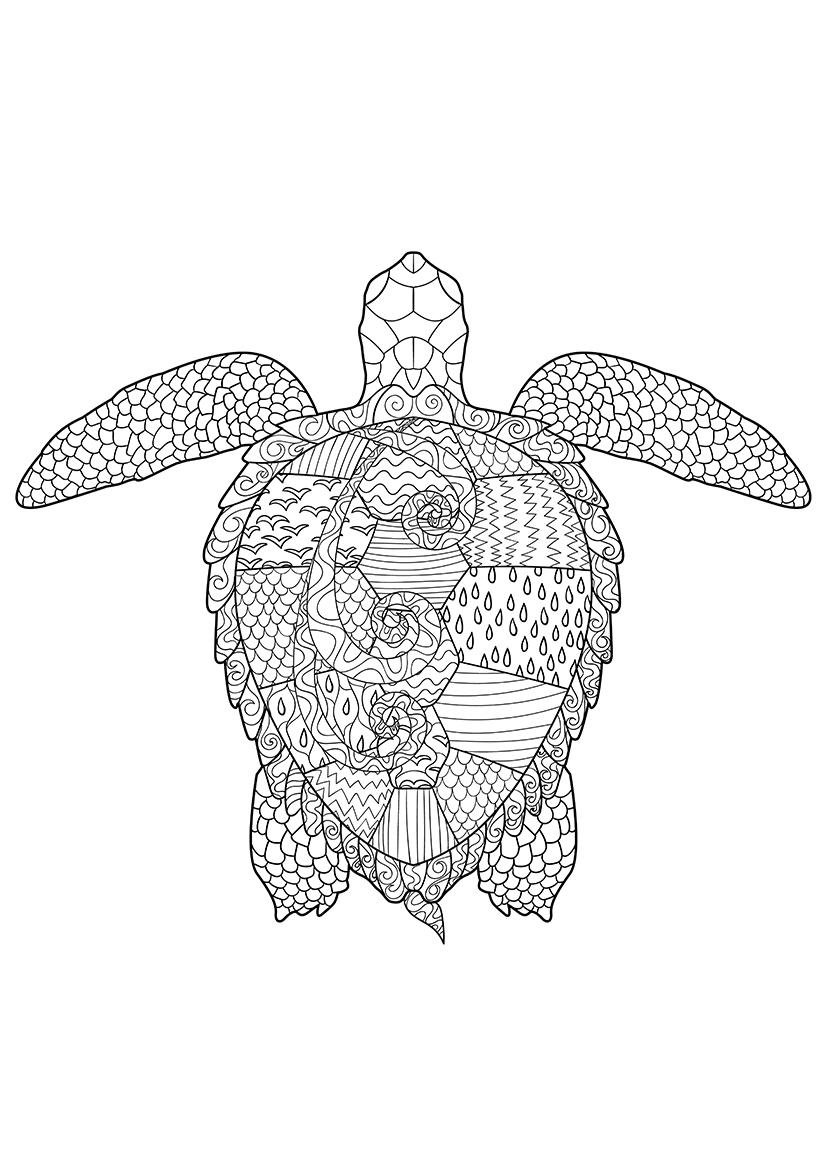 Раскраска Черепаха распечатать или скачать бесплатно