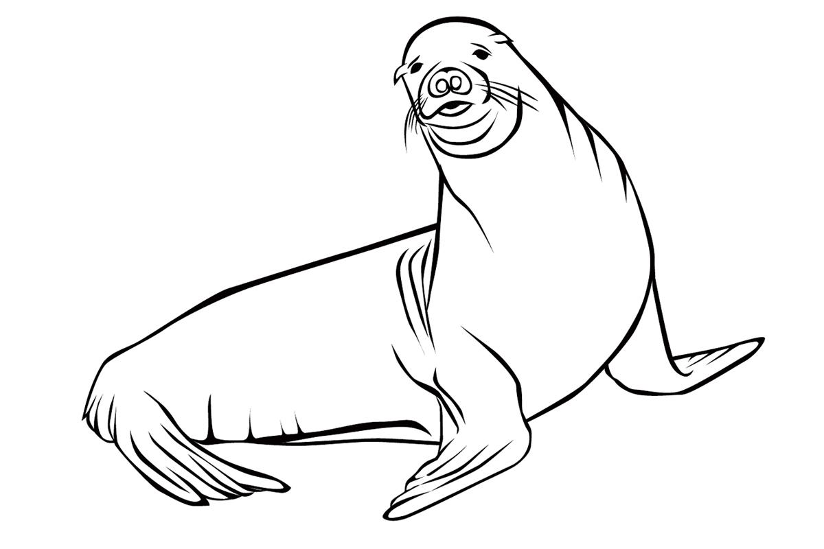 Раскраска Тюлень распечатать или скачать бесплатно