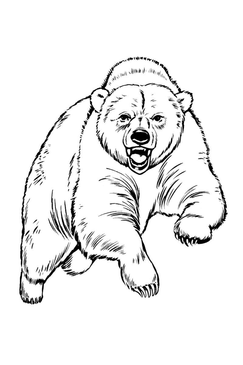 раскраска медведь распечатать или скачать бесплатно