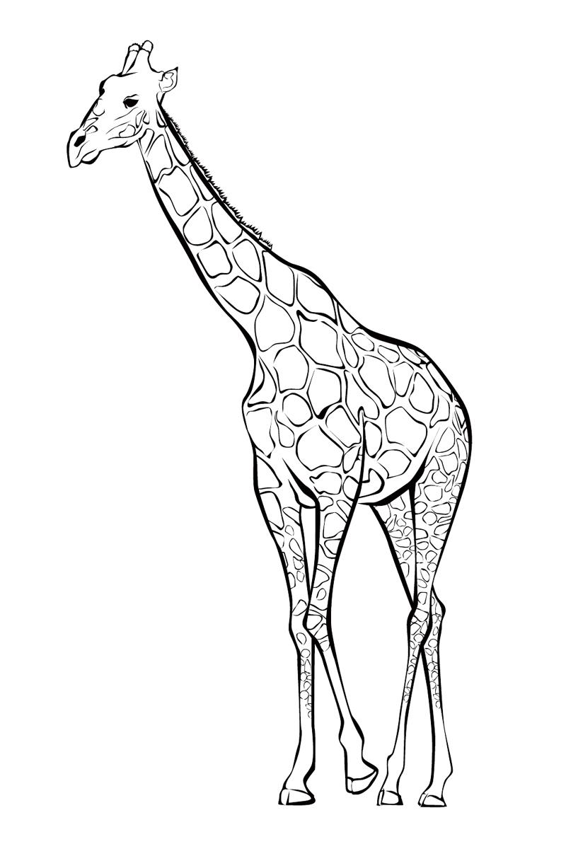 Раскраска Жираф распечатать или скачать бесплатно