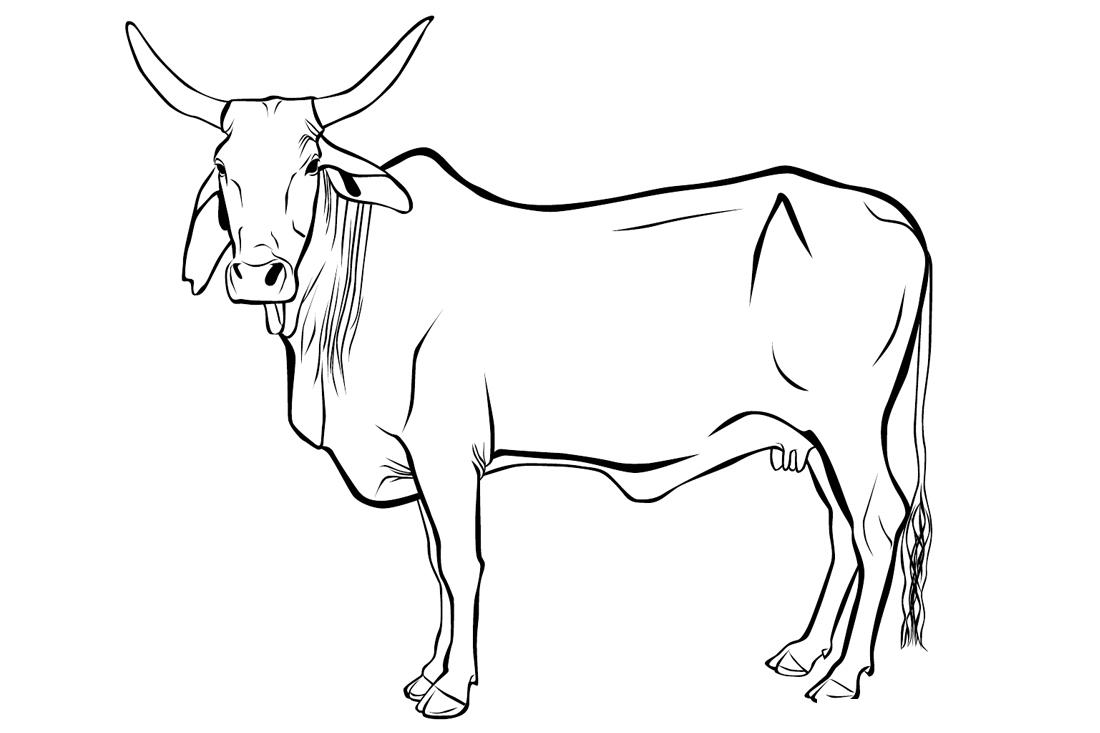 Раскраска Индийская корова распечатать или скачать бесплатно