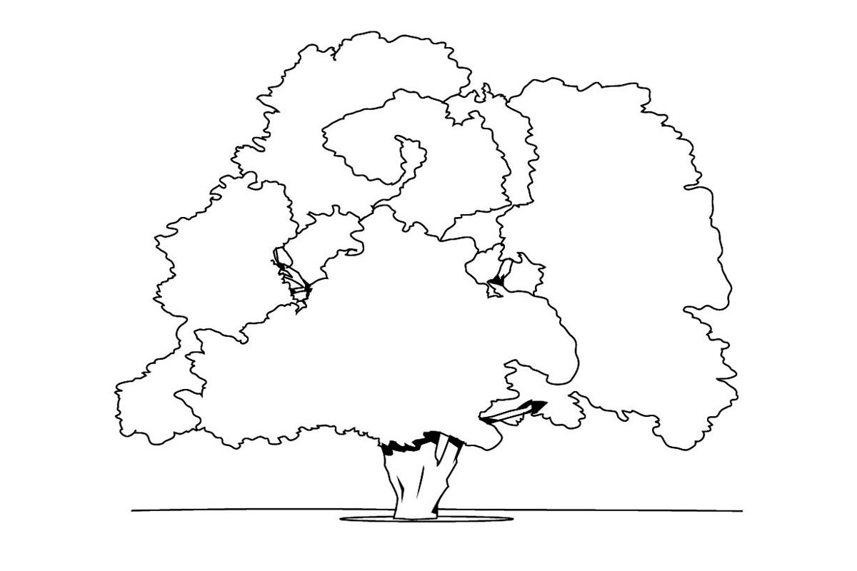 Раскраска Старый дуб распечатать или скачать бесплатно
