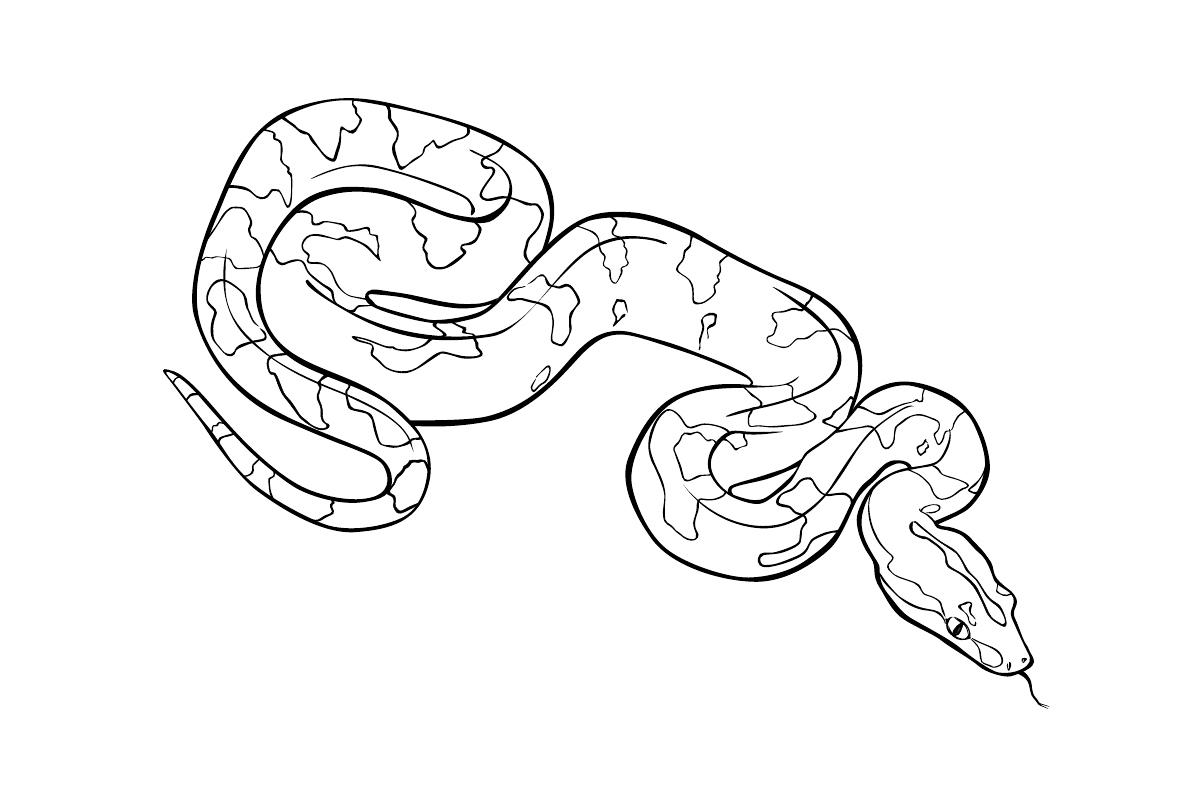 распечатать картинки змей тут всего лишь