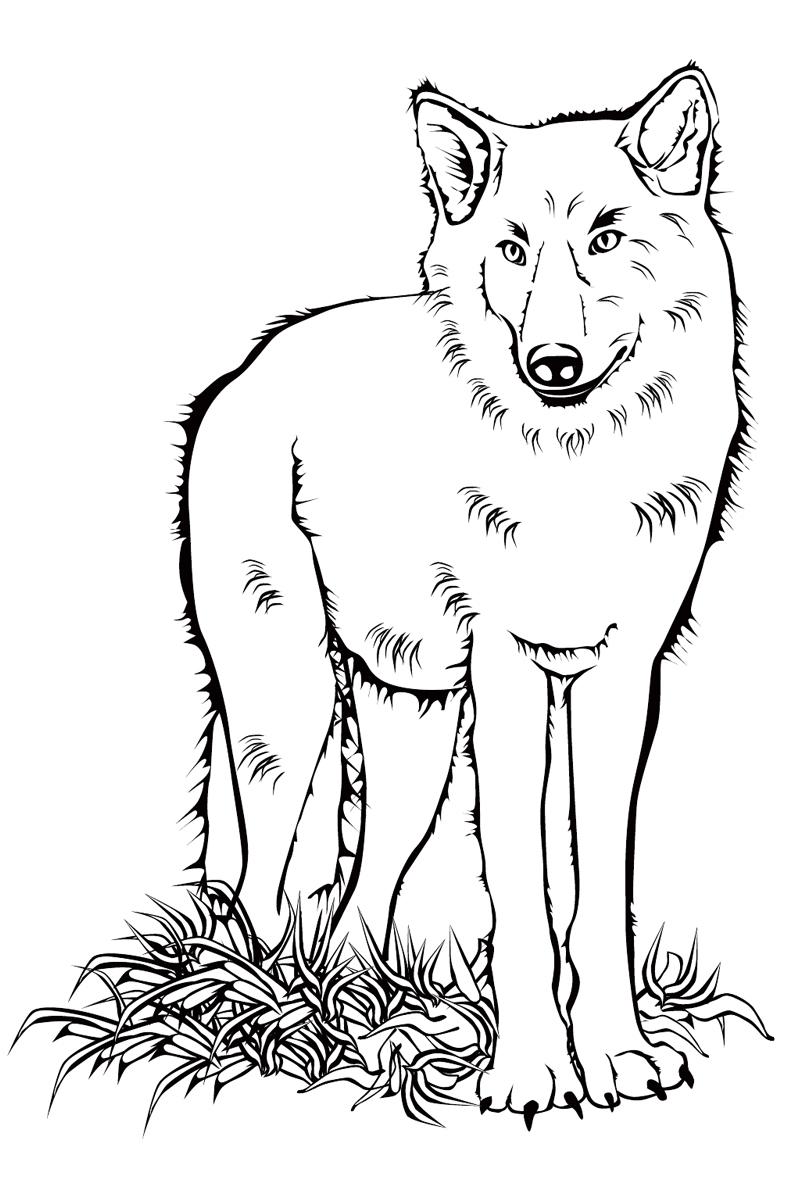 Раскраска Волк распечатать или скачать бесплатно
