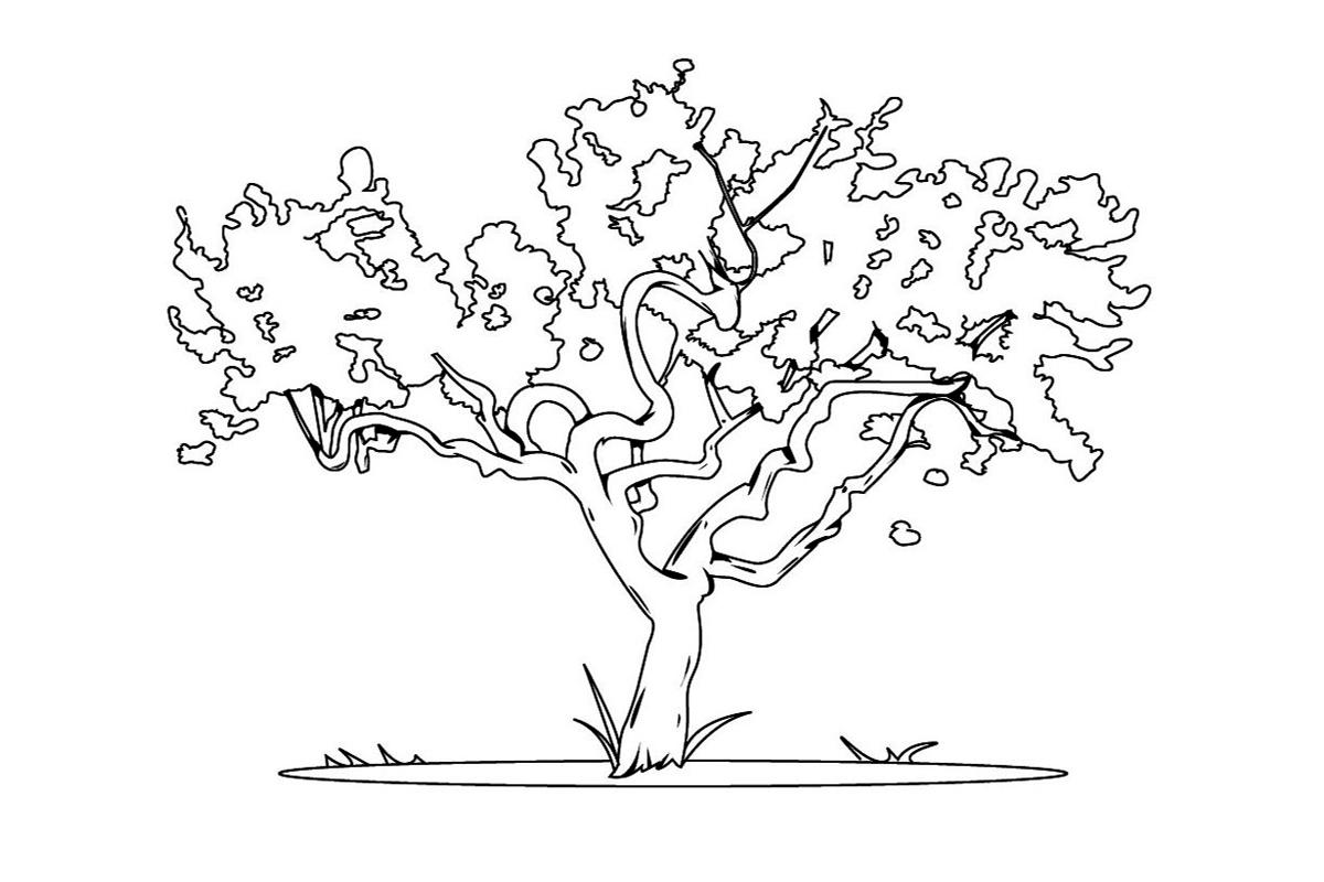 Раскраска Карликовое дерево распечатать или скачать бесплатно