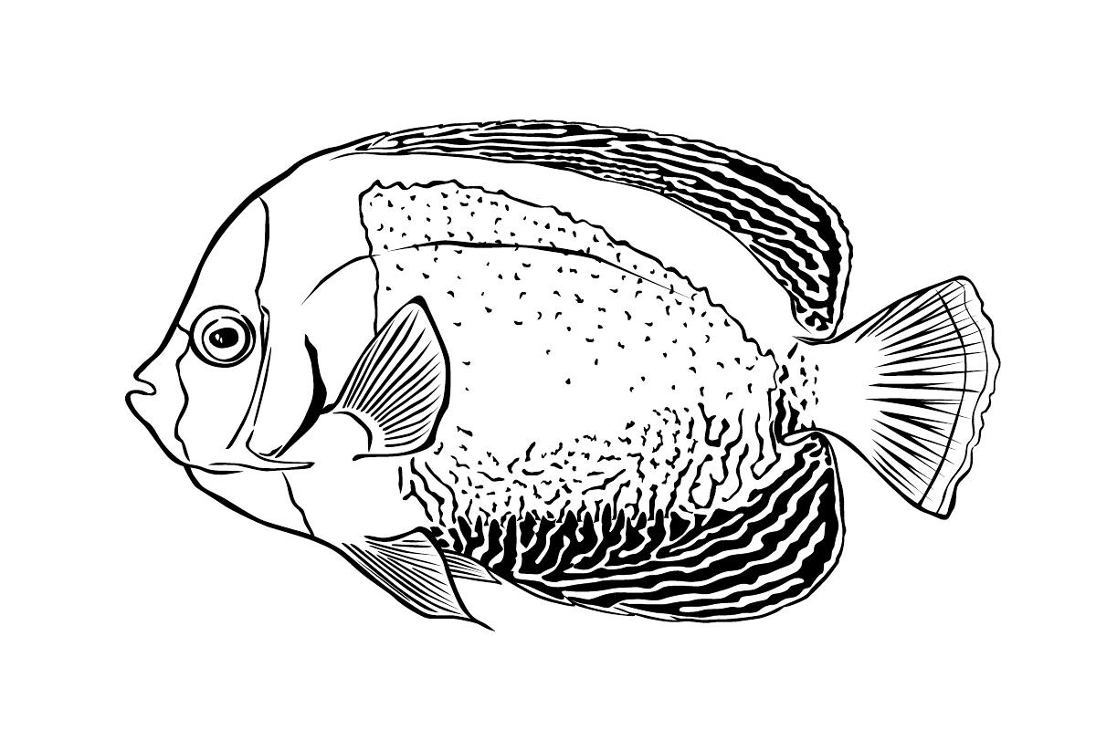 Раскраска Рыба Морской ангел распечатать или скачать бесплатно