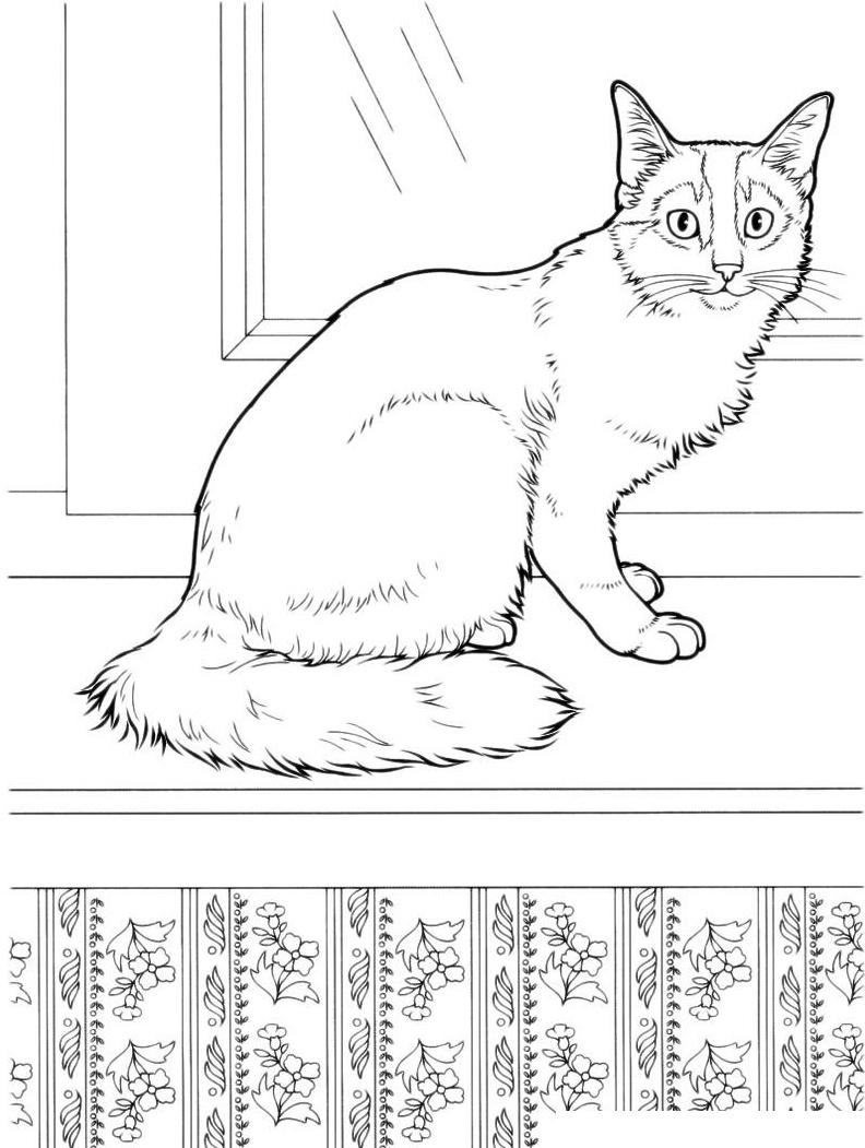 Раскраска Домашняя кошка на подоконнике распечатать или ...