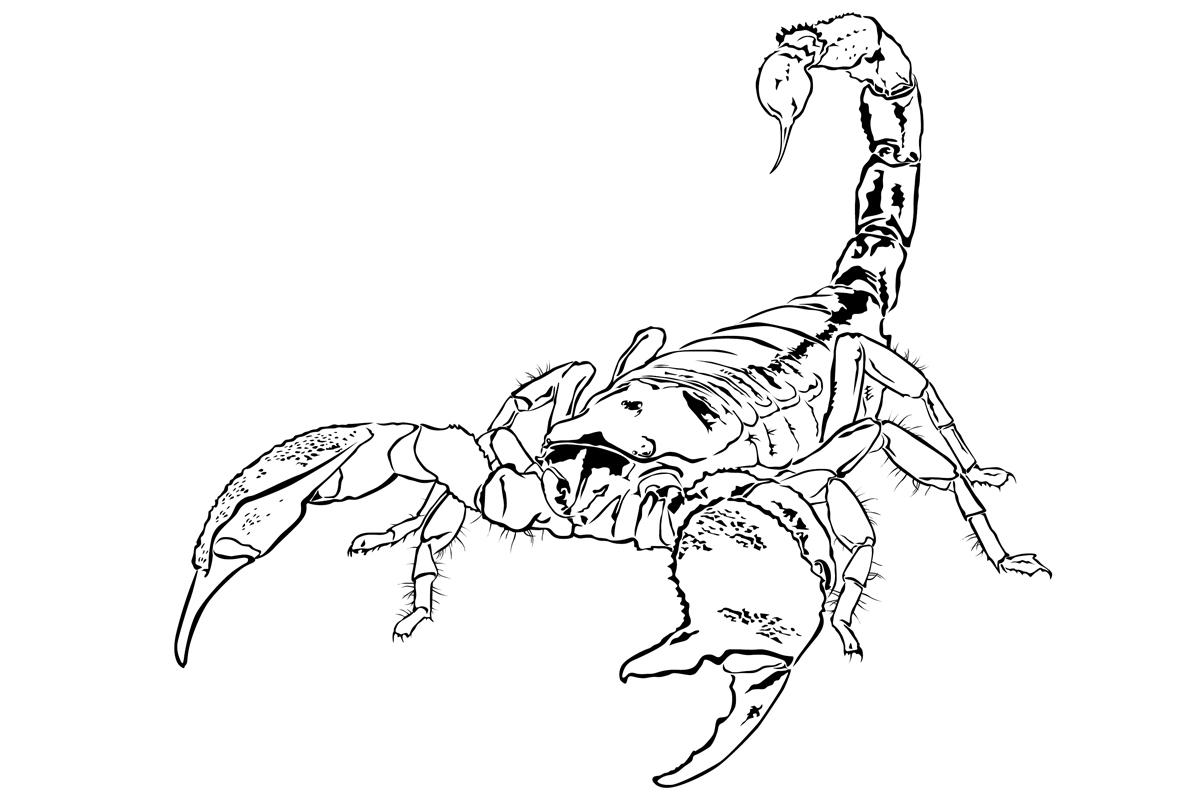 Раскраска Скорпион распечатать или скачать бесплатно