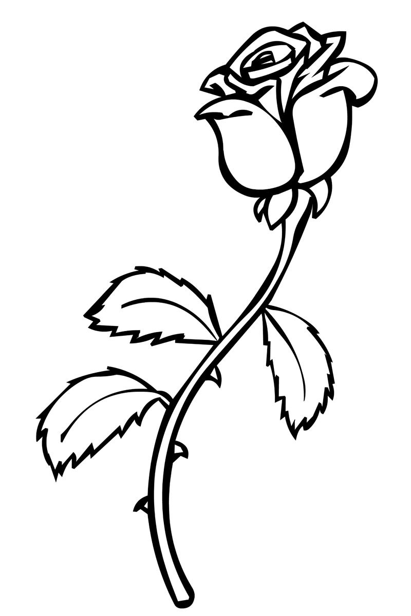 Раскраска Роза распечатать или скачать бесплатно