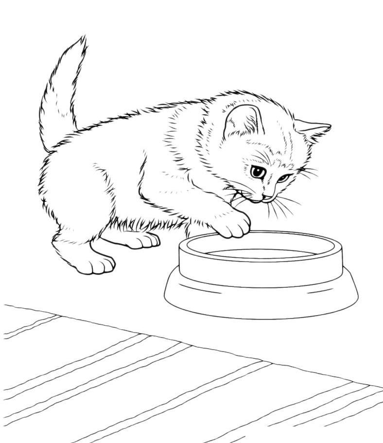 Раскраска Кот опускает лапу в мисочку распечатать или ...