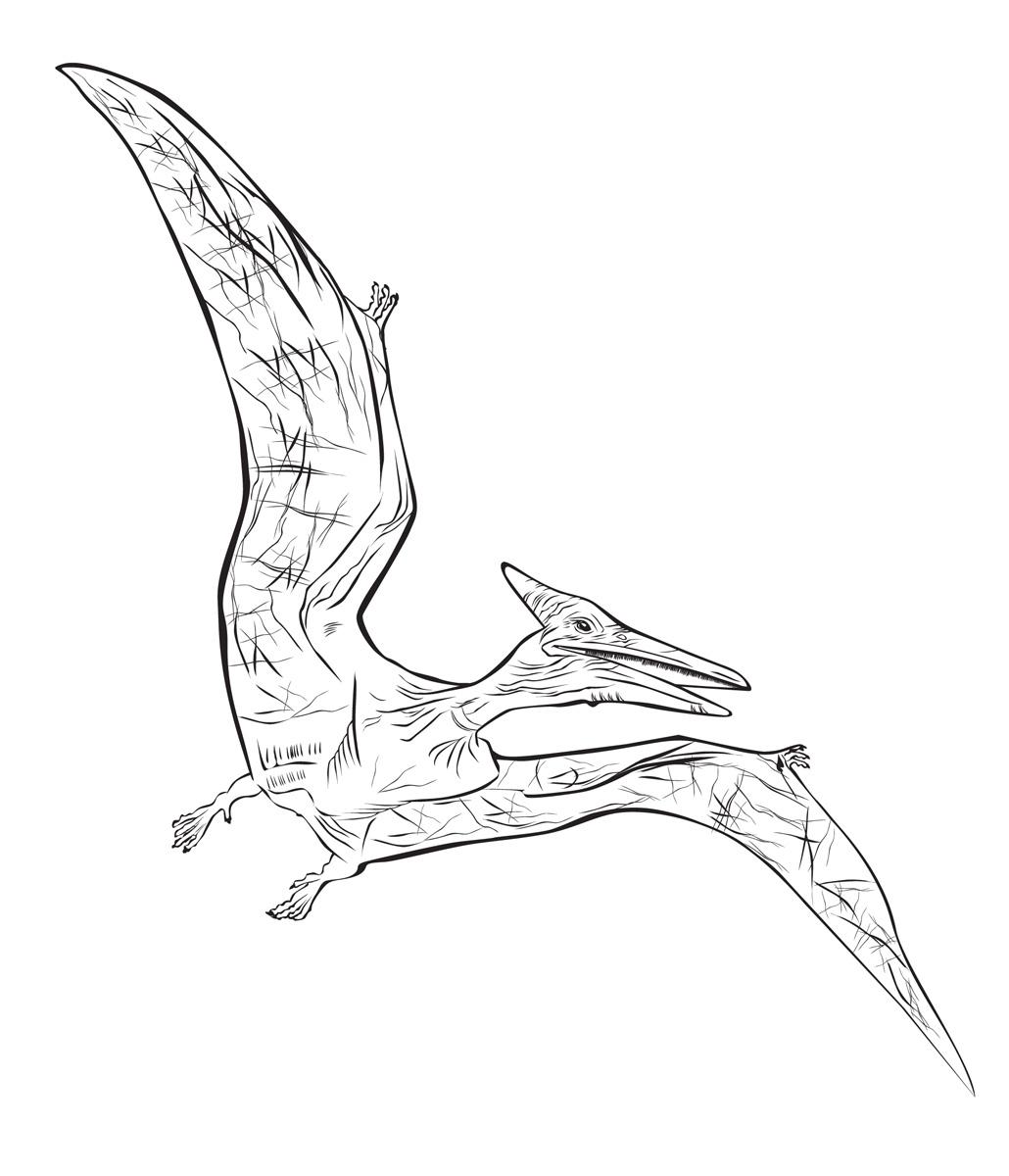 Раскраска Птерозавр распечатать или скачать бесплатно