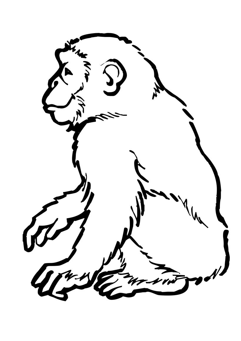 Раскраска Шимпанзе распечатать или скачать бесплатно