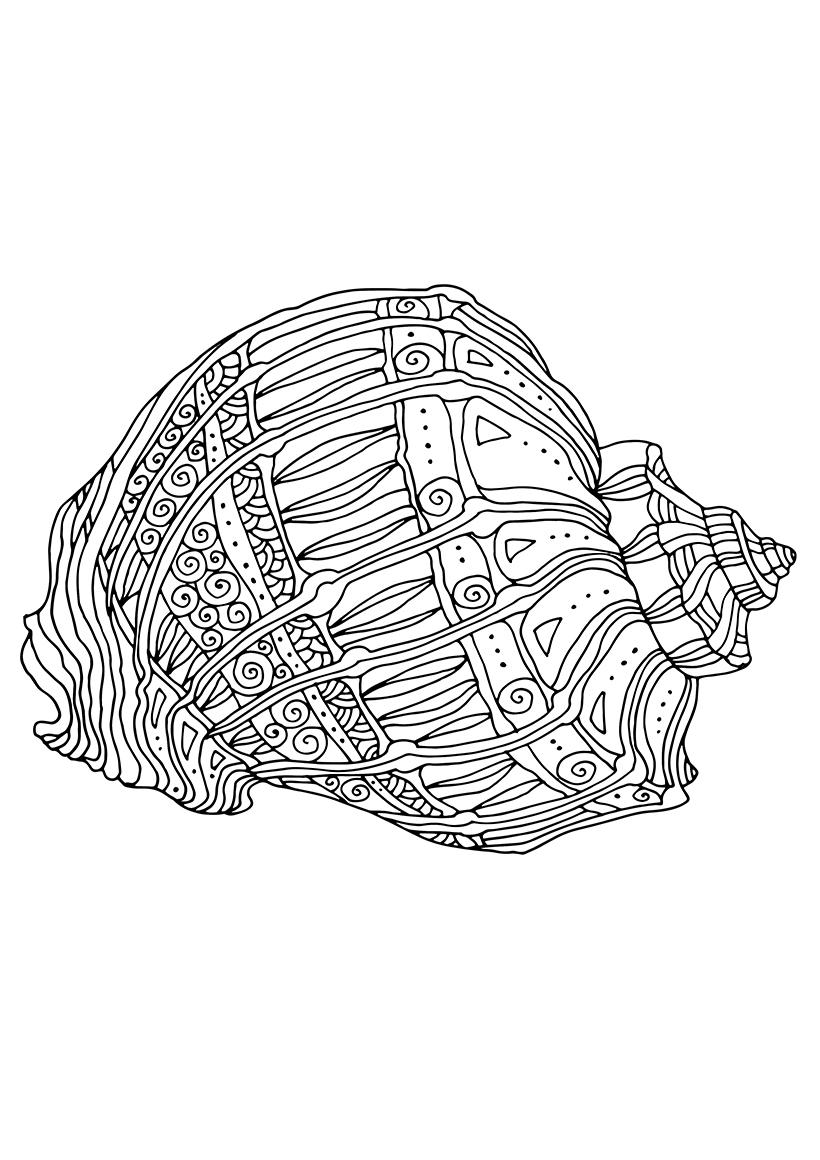 Раскраска Ракушка морская распечатать или скачать бесплатно