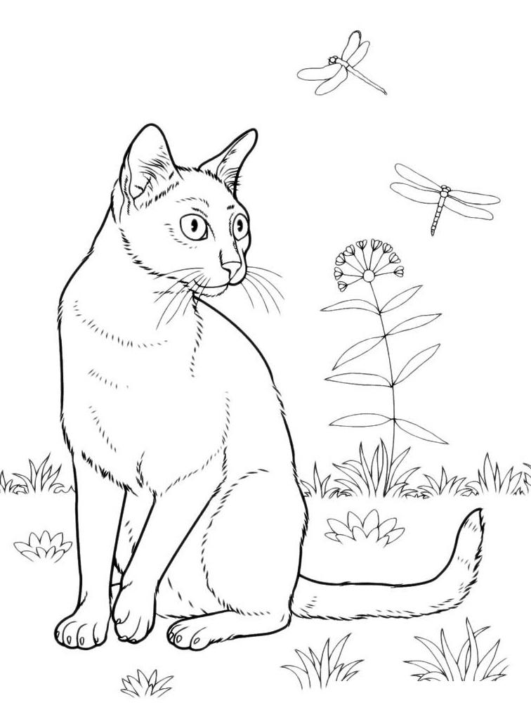 Раскраска Котик и бабочки в поле распечатать или скачать ...