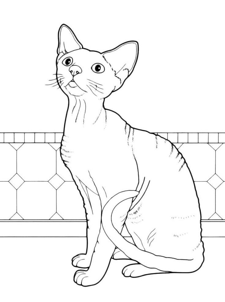 Раскраска Кошка просит, чтобы её покормили распечатать или ...