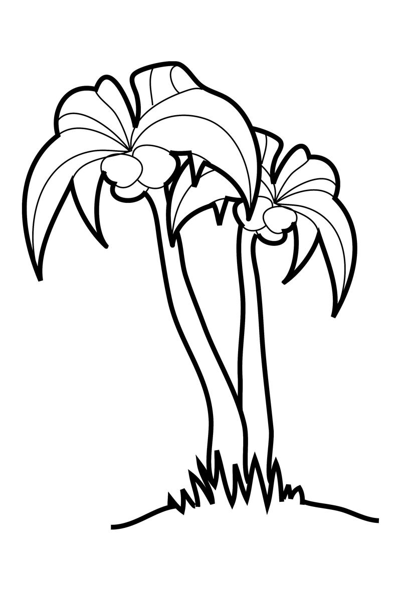 Раскраска Пальма распечатать или скачать бесплатно