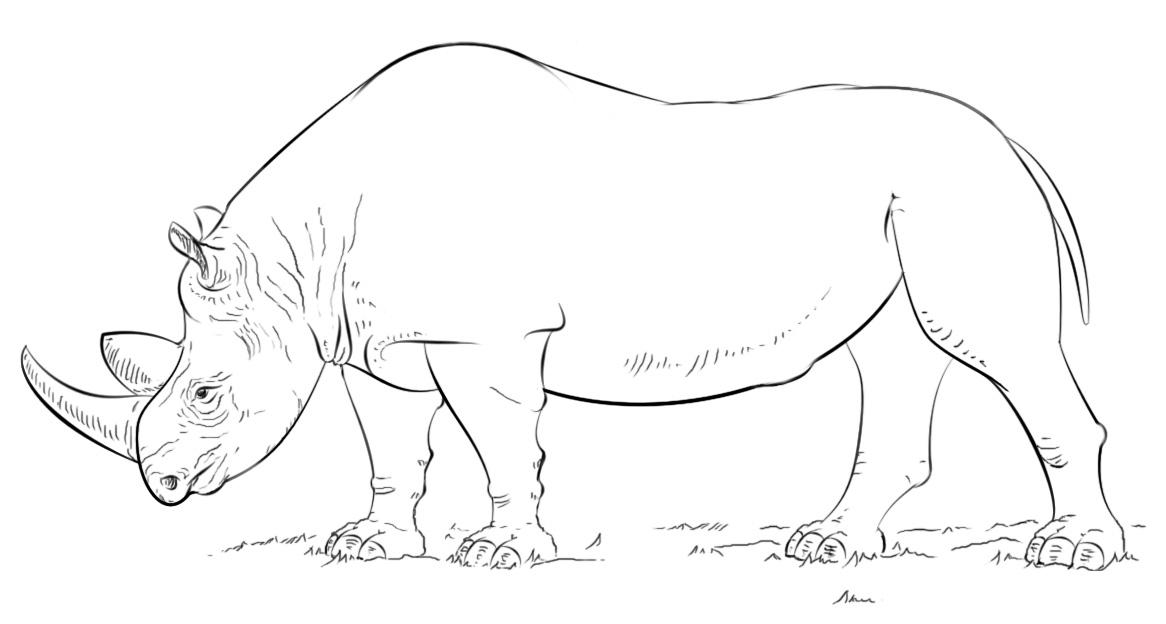 раскраска большой носорог распечатать или скачать бесплатно