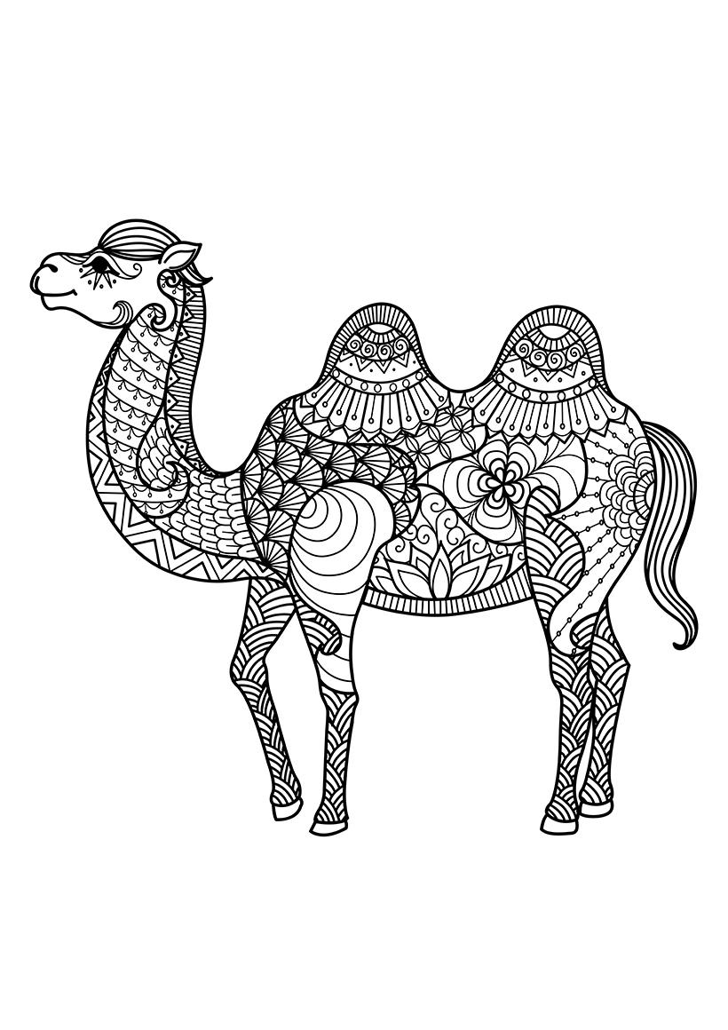 Раскраска Верблюд распечатать или скачать бесплатно