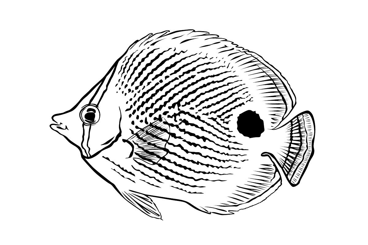 Раскраска Рыба-бабочка распечатать или скачать бесплатно