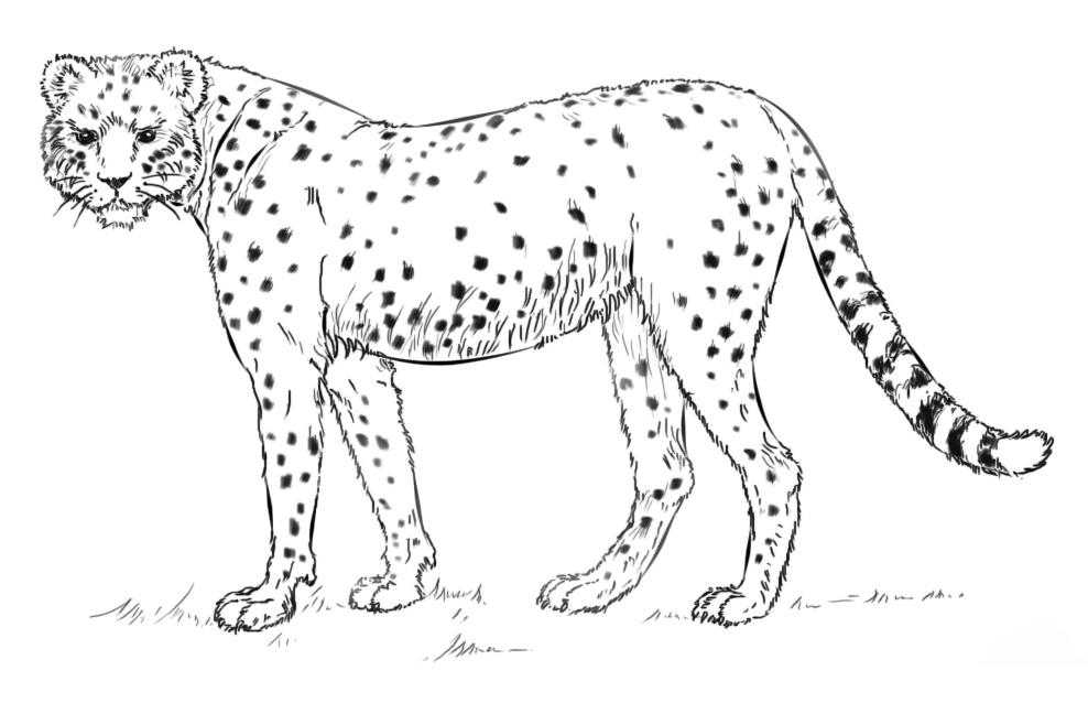 рисунок хищника животного однотонную футболку