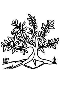 Раскраска Дерево без листьев распечатать или скачать бесплатно