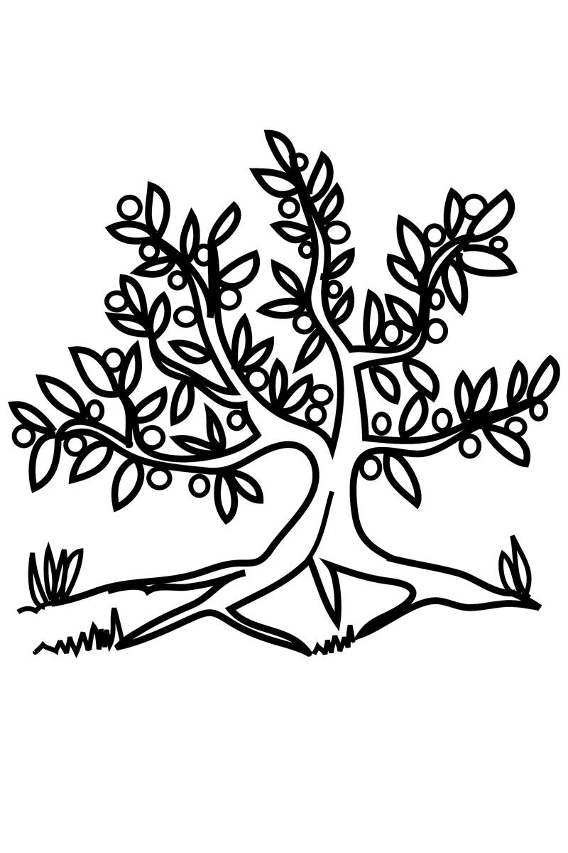 Раскраска Оливковое дерево распечатать или скачать бесплатно