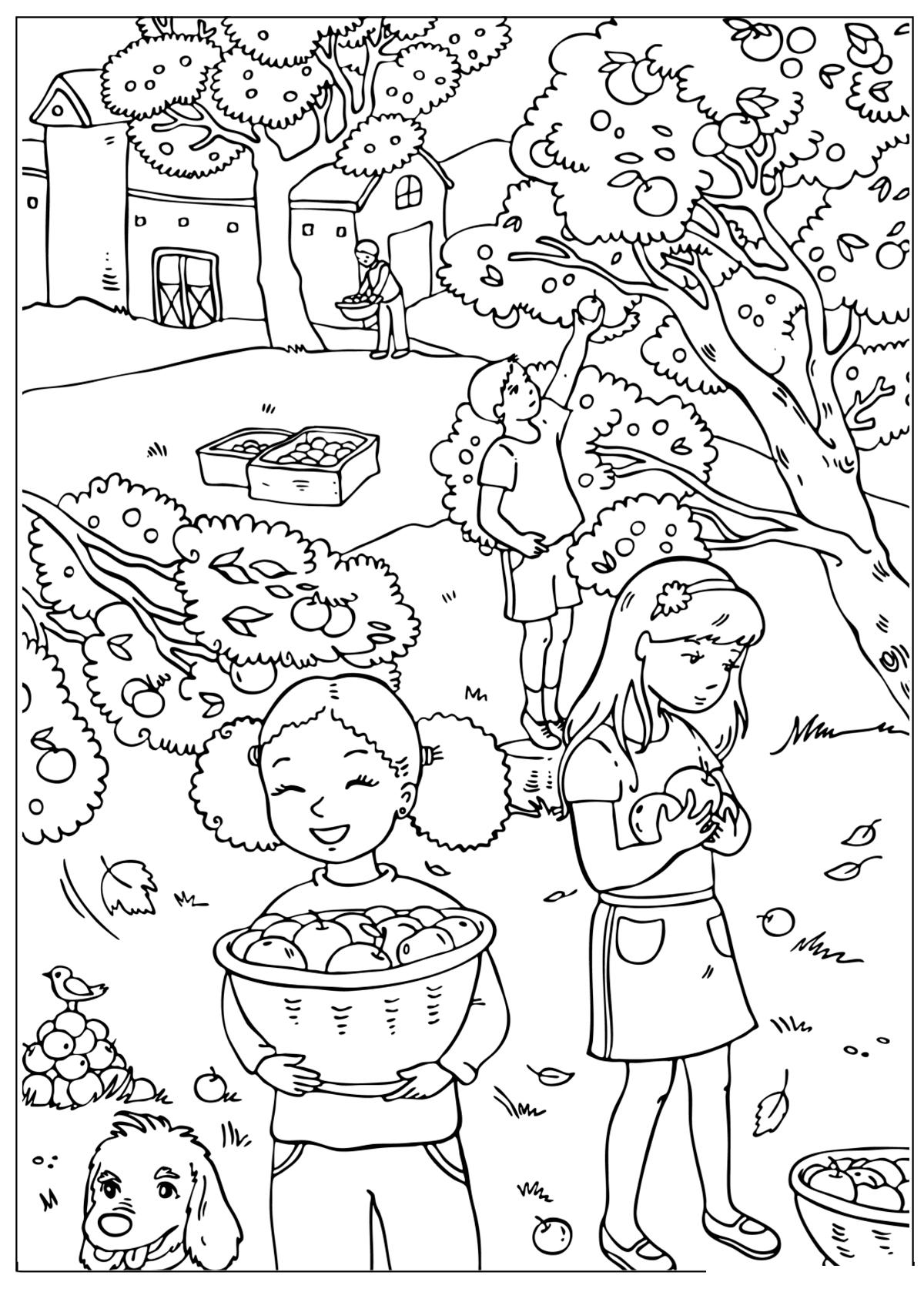 Раскраска Осенний сбор яблок распечатать или скачать бесплатно