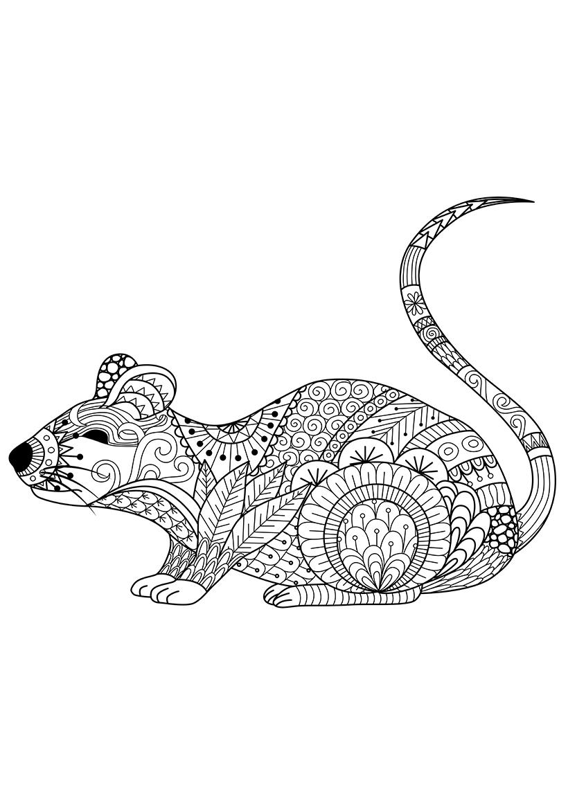 Раскраска Крыса распечатать или скачать бесплатно