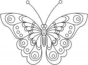 Раскраска Бабочка с большими крыльями распечатать или ...