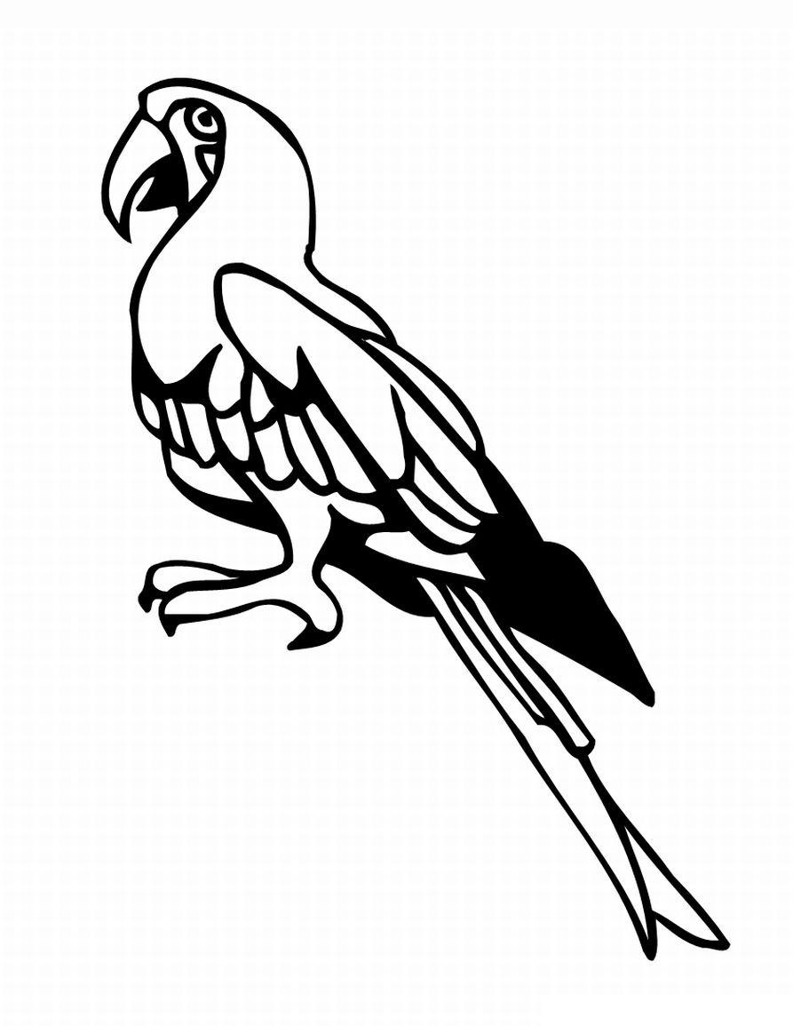 Раскраска Задумчивый попугай распечатать или скачать бесплатно