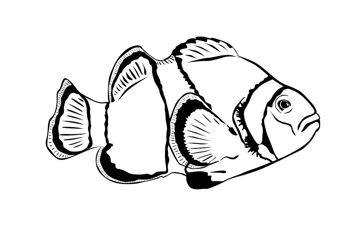 Раскраска Летающая рыбка распечатать или скачать бесплатно