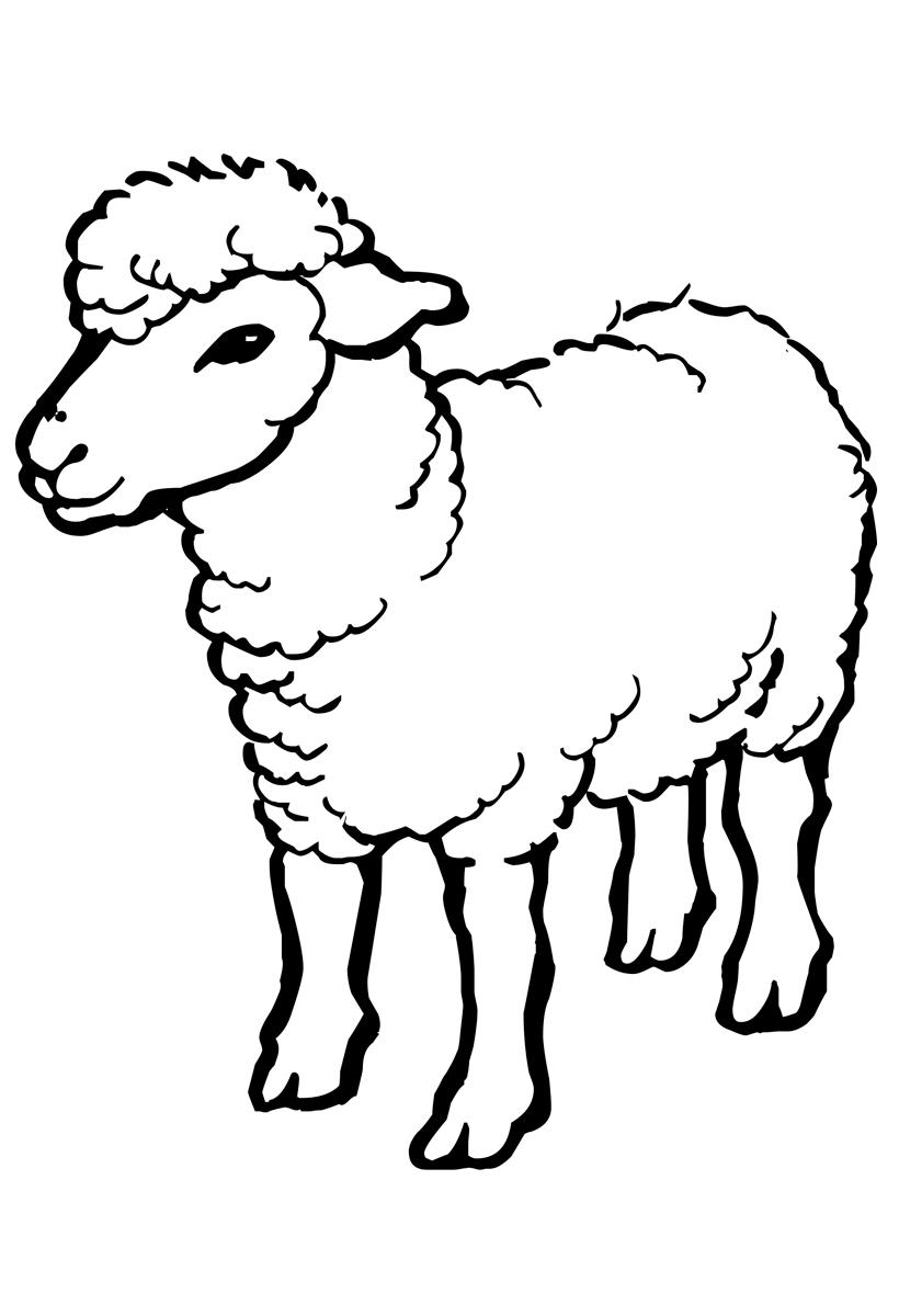 Раскраска Овца распечатать или скачать бесплатно